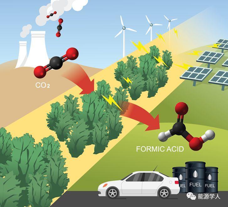 多孔纳米泡沫铟:一种新型高效二氧化碳产甲酸电催化材料