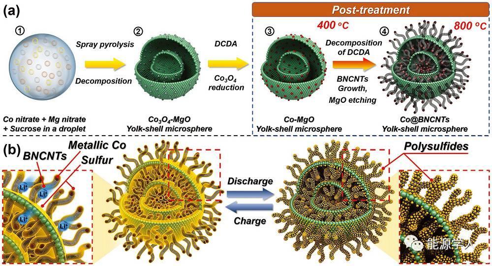 锂硫电池:生长在蛋黄壳微球中的竹节状嵌钴CNT