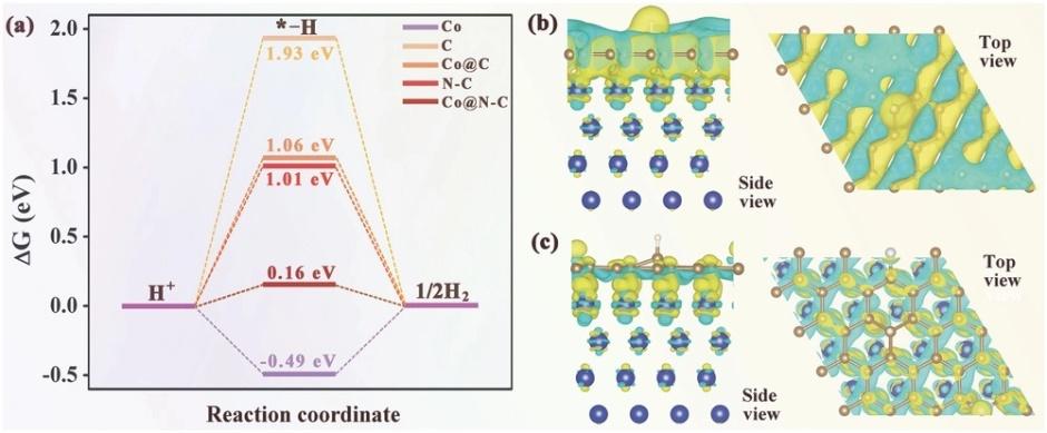 复旦大学Advanced Materials:碳纳米管接枝的石墨烯片材中包裹的超细Co纳米颗粒作为电催化剂用于析氢反应