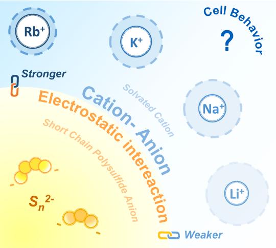 港中文JACS: 阳离子对碱金属-硫电化学反应中间产物多硫离子的选择性