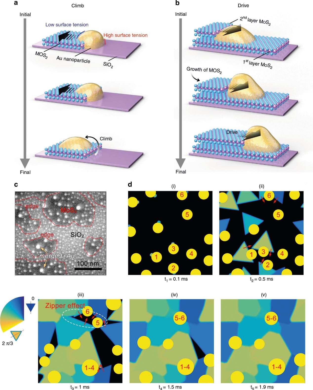 Nat子刊: 二维材料晶界工程助力高效析氢反应