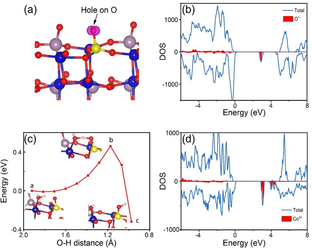 何冠杰博士Adv. Sci.:磷修饰CoMoO4自支撑结构用于高效析氢电催化剂