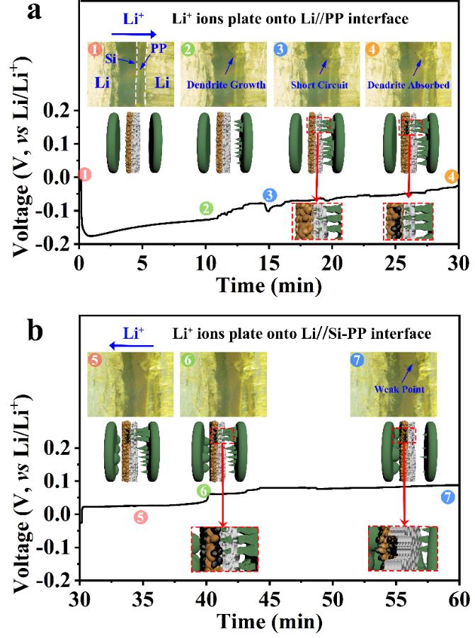 """Energy Storage Mater.:一种用于高面容量锂金属电池的""""吃枝晶""""型隔膜"""