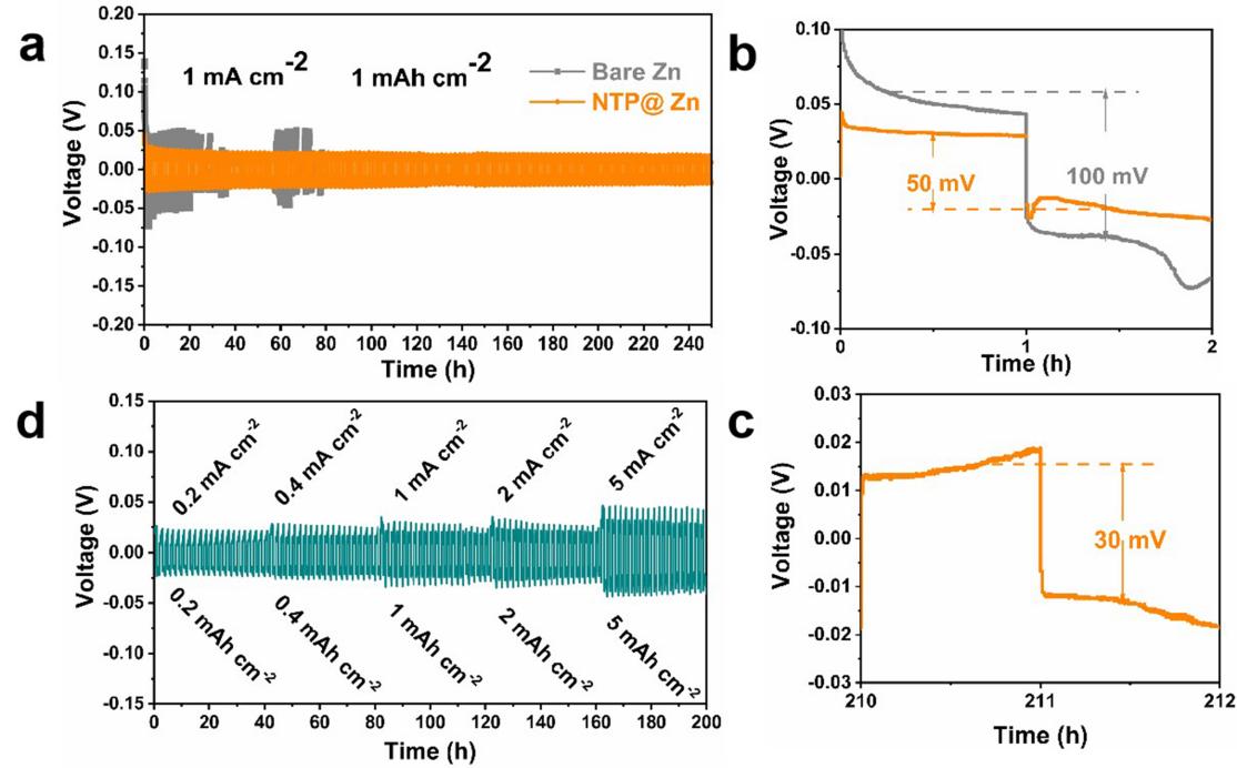 AFM:锌金属负极NTP固态电解质保护层助力水系锌离子电池实现超长循环