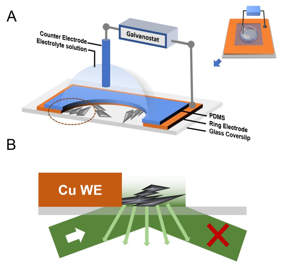 南方科大郝瑞团队:锌离子电池中枝晶初期成核、生长的超时空分辨率动力学分析
