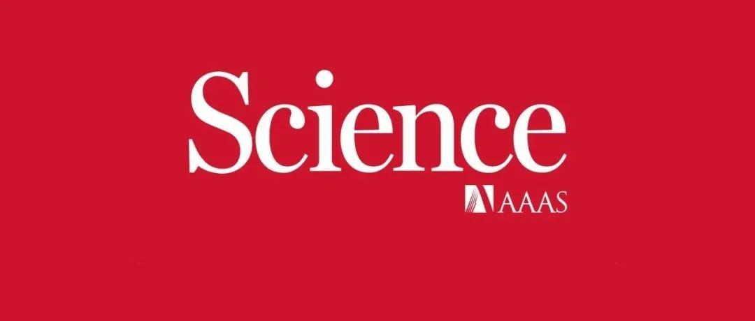河南师大白正宇/美国阿贡陆俊/温州大学袁一斐AEM:介晶纳米颗粒增强Li+存储