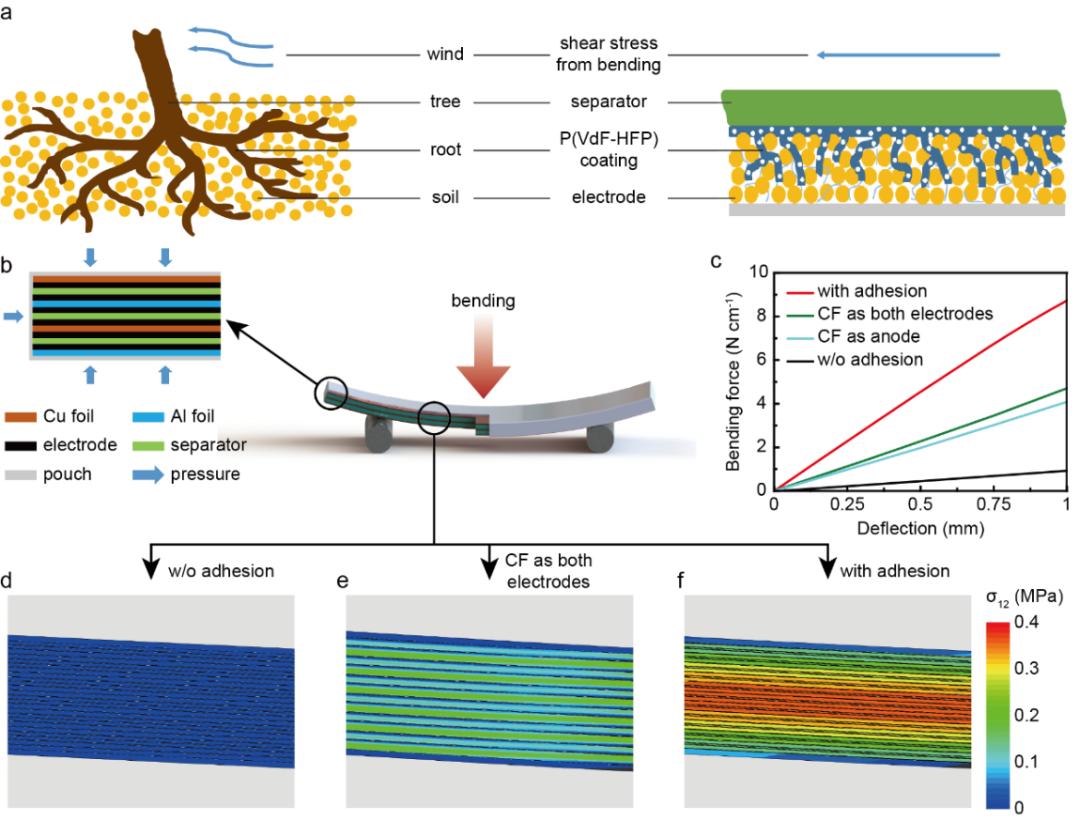 哥伦比亚大学杨远教授Adv. Energy Mater.: 仿树根界面设计实现抗弯增强结构电池
